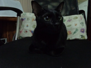Itim the Black Kitty