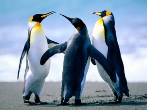 Penguins Plotting