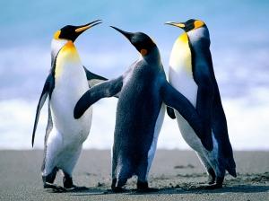Penguins Plotting