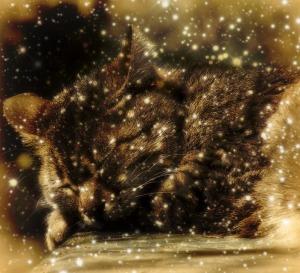 ReadinginBetween_Sleeping Cat